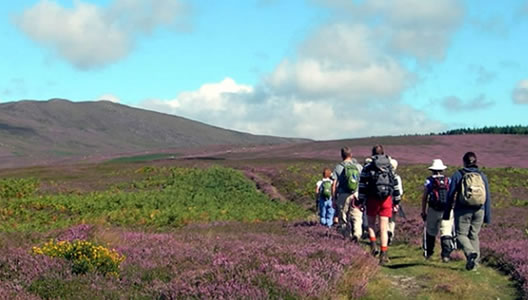5 Day Self-Guided Walking Holiday Wicklow Way